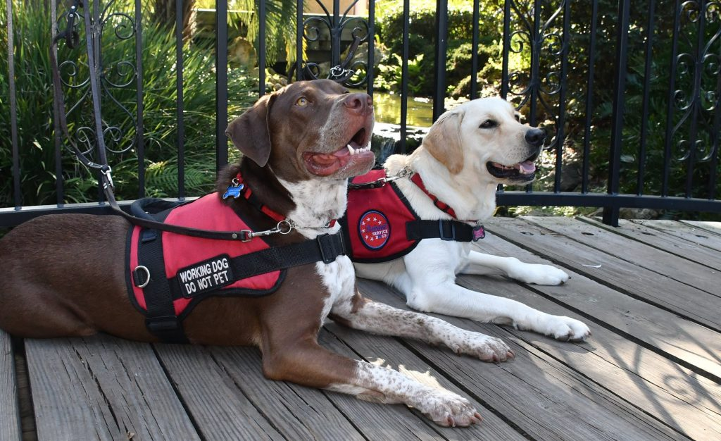 dogs with patriot service dogs vests