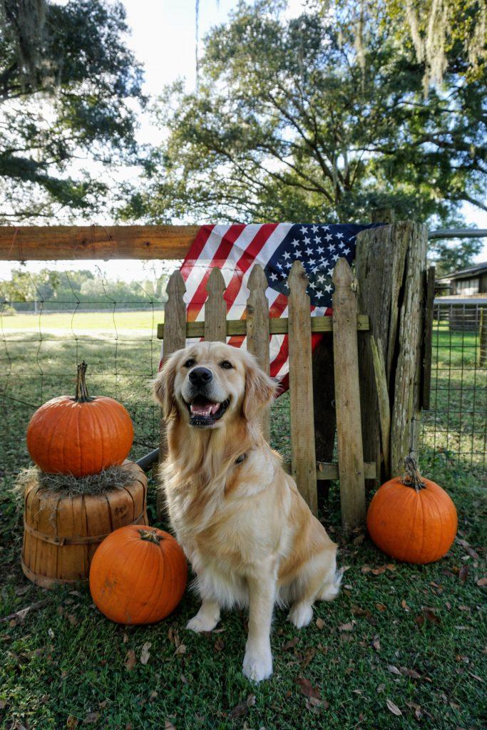 PSD dog with pumpkins