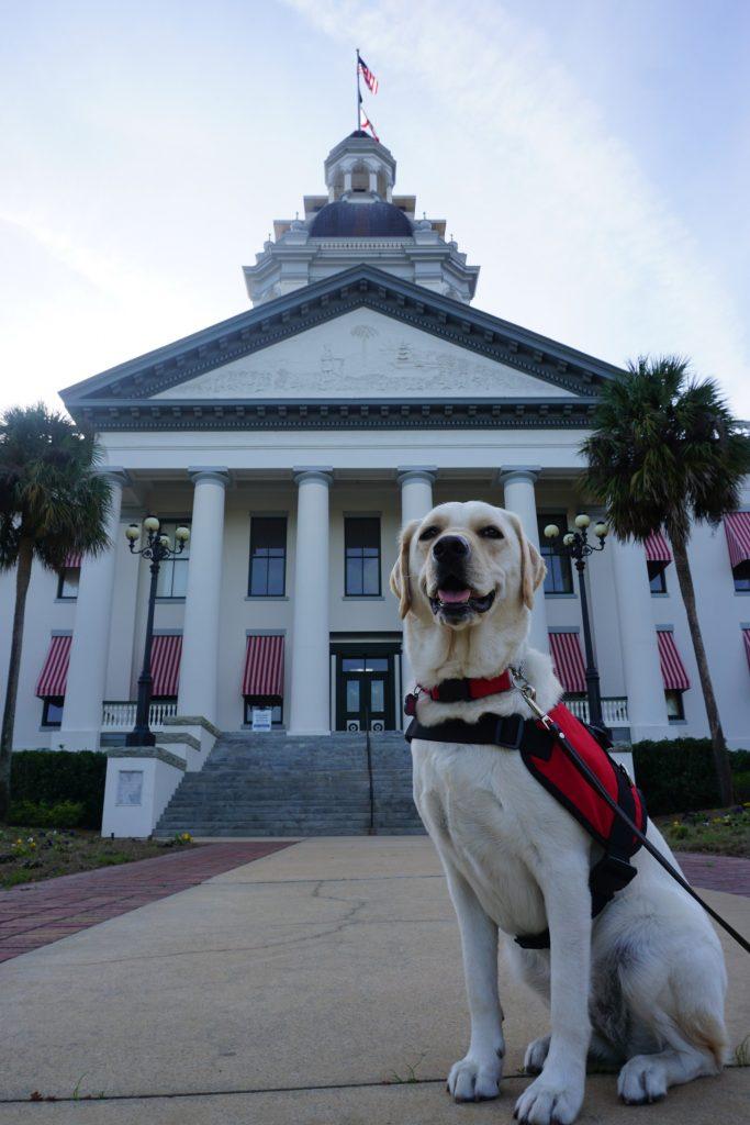 dog at capitol