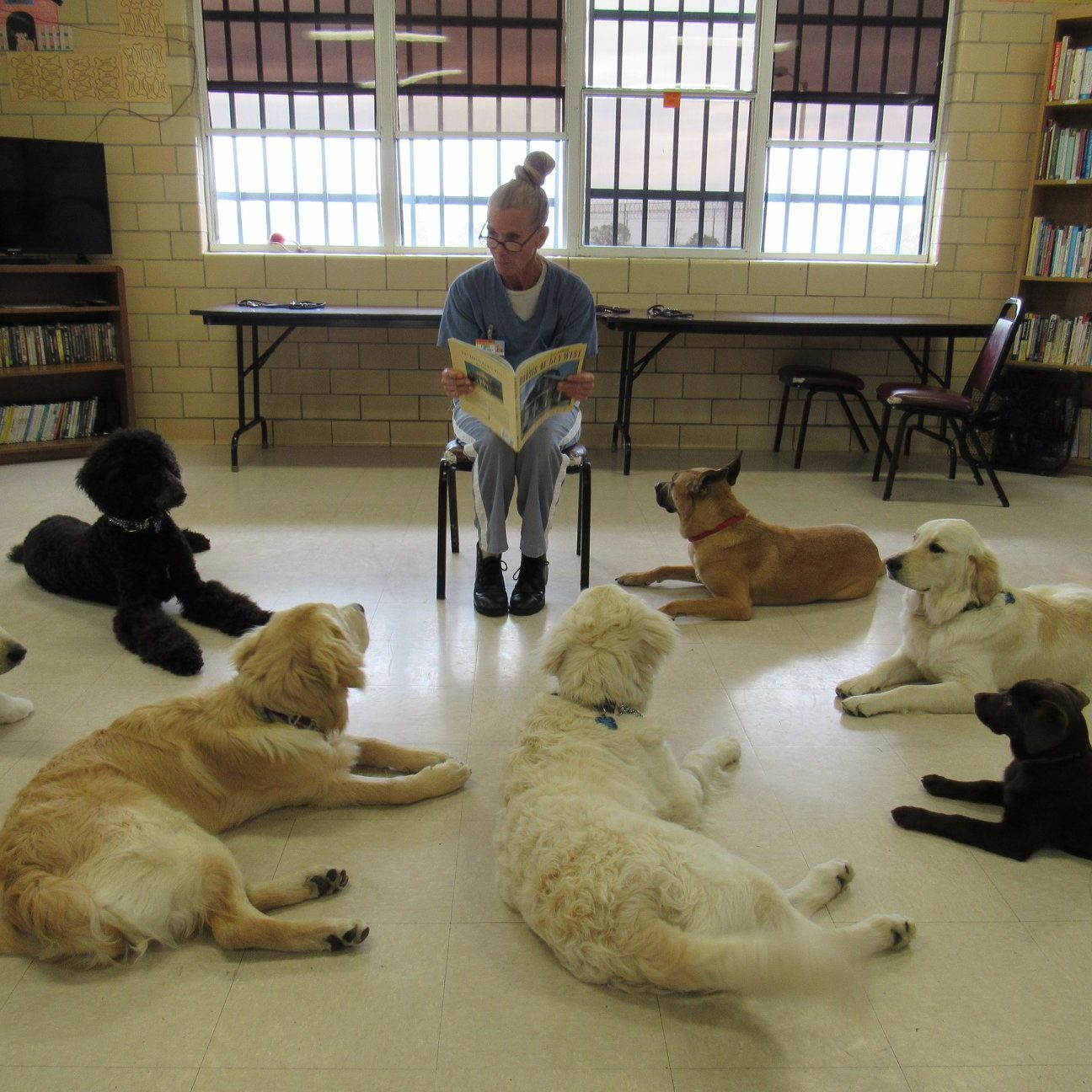 dogs at reading time