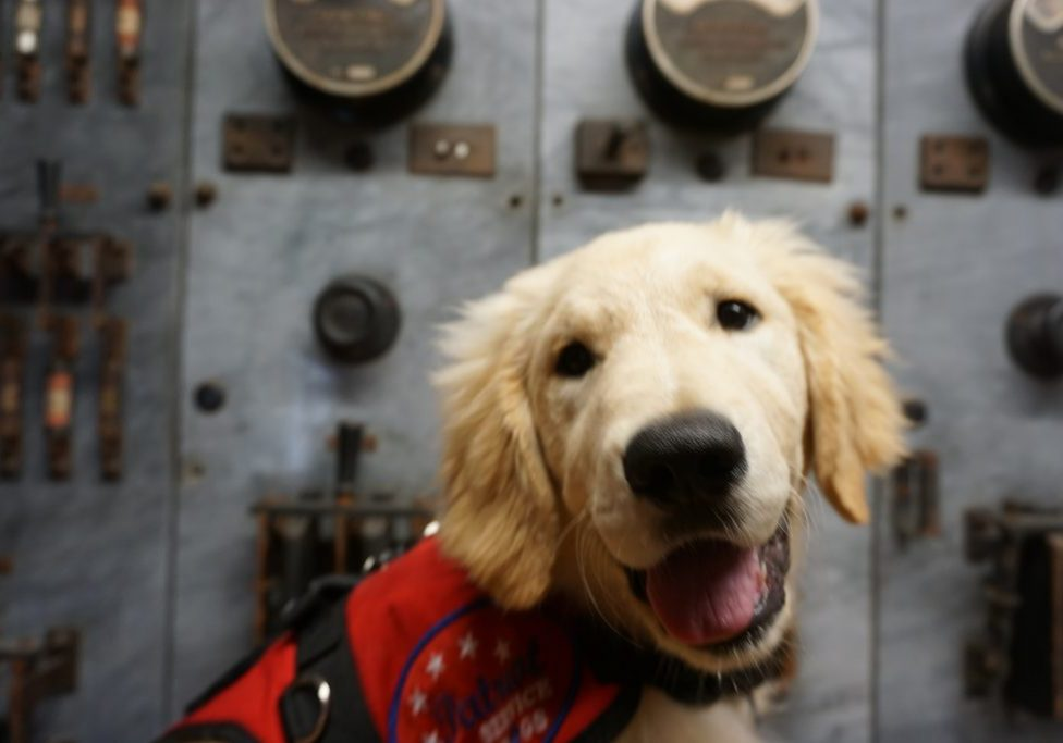 Welcome to Patriot Service Dogs